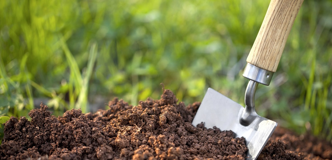 How to Keep your Cannabis Soil Healthy