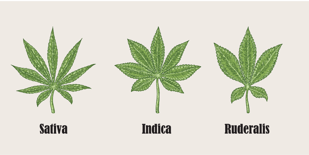 Different types marijuana leaves