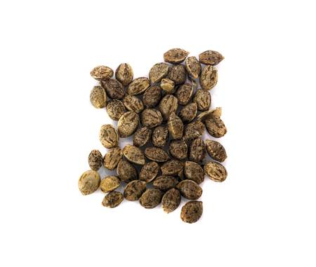 cannabis plant seeds