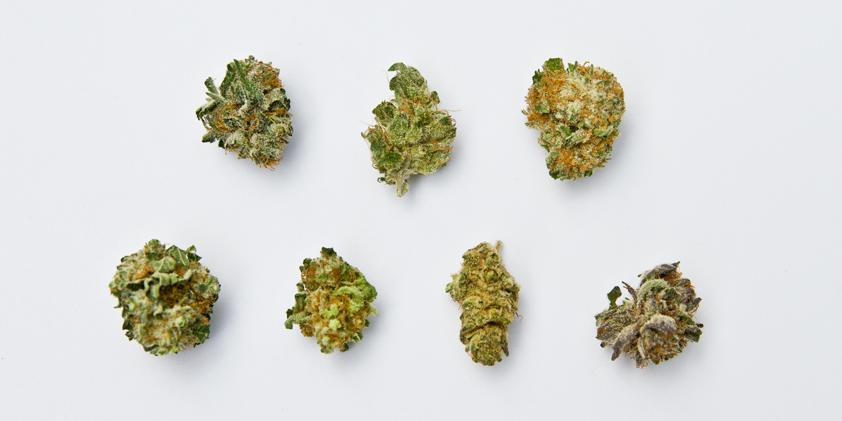 Cannabis bud types