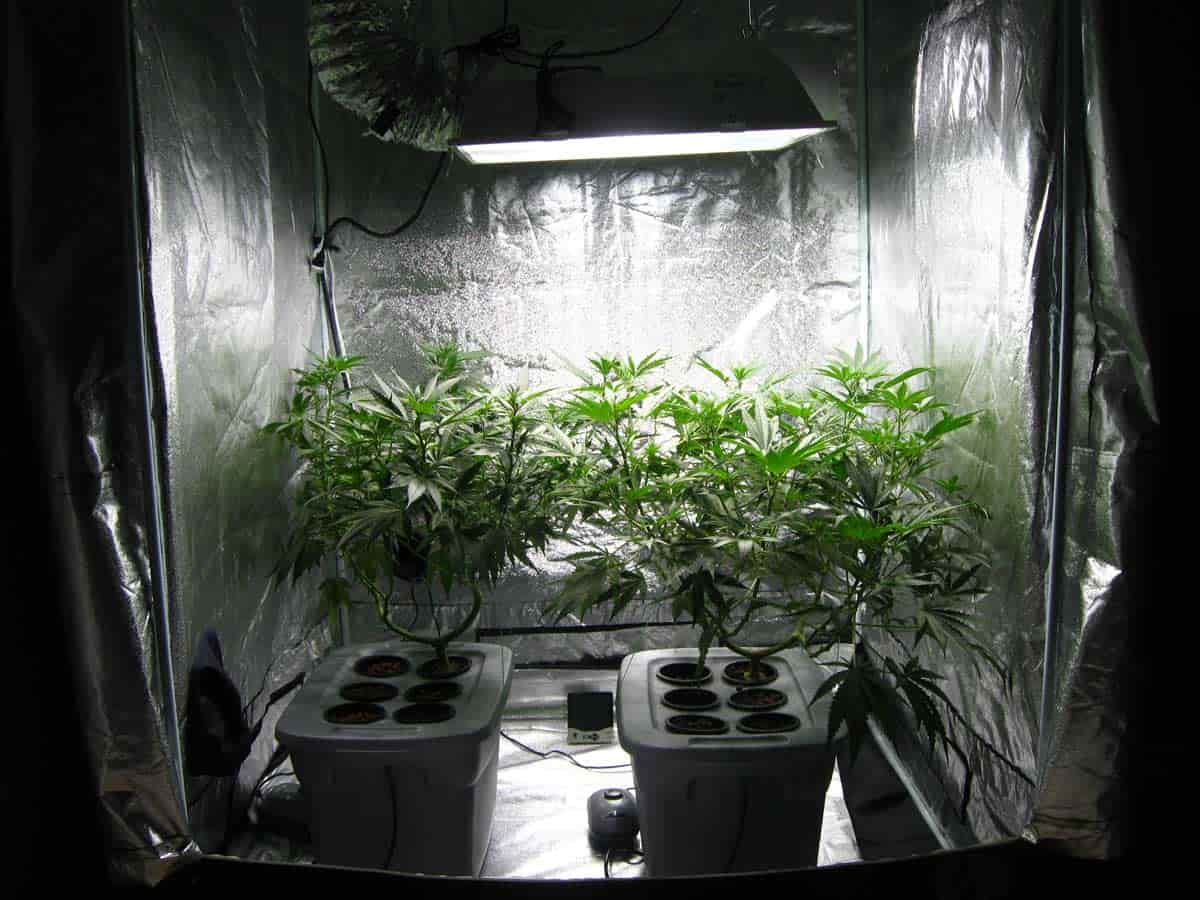 reflective area in grow tent