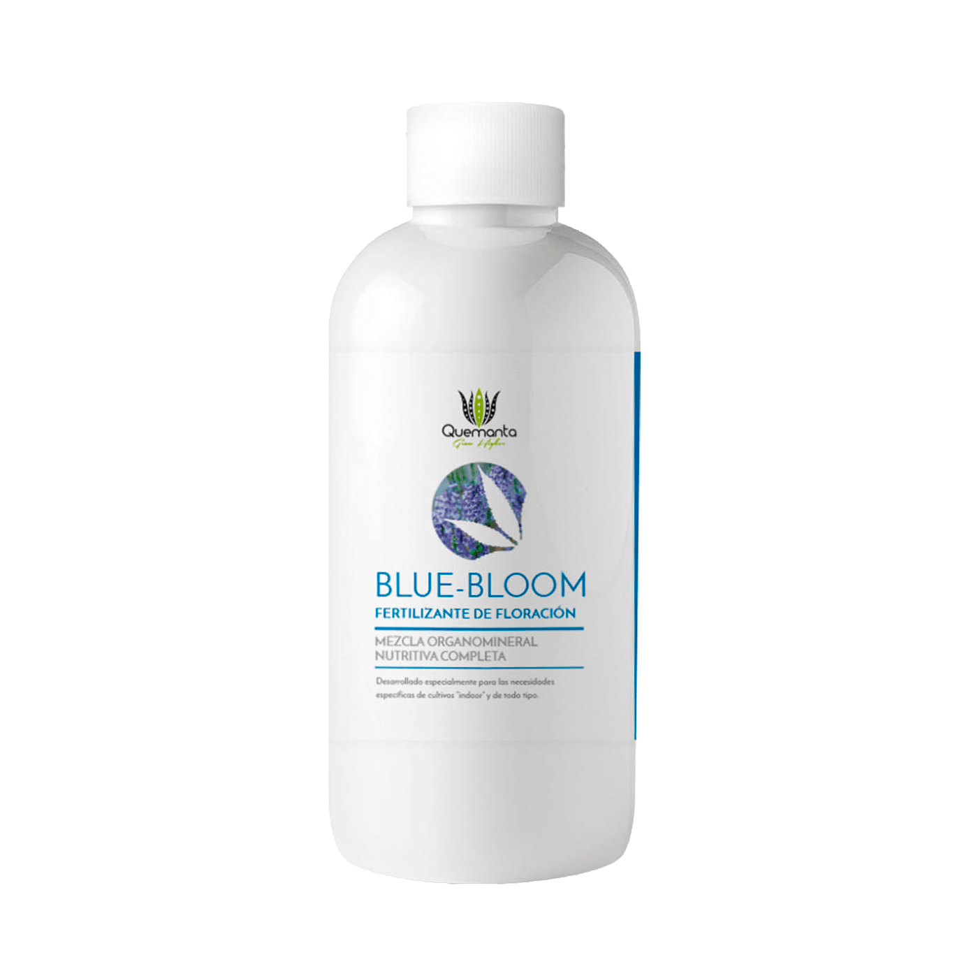 Blue Bloom by