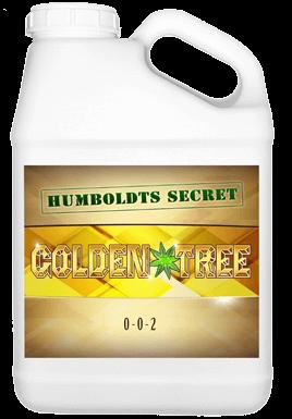 Golden Tree by Humboldts Secret