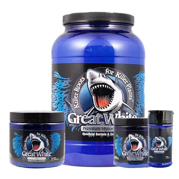 Great White by