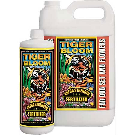 Tiger Bloom by