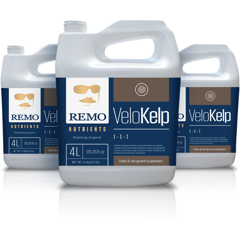 VeloKelp by Remo Nutrients