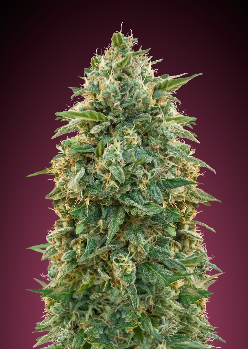 Grown by alonzo92530