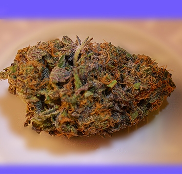 DragonFly by Grand Daddy Purp