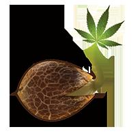 Emerald Triangle Seeds Seed Company