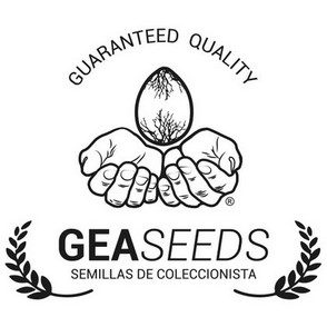 Auto Haze by Gea Seeds