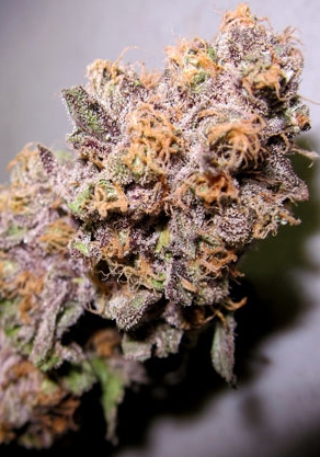 Ken's Grand Daddy by Grand Daddy Purp