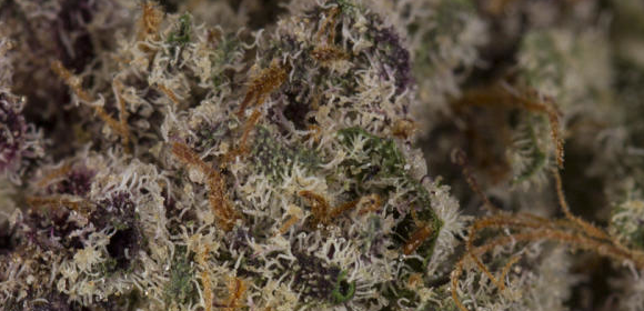 Brain Candy Strain Information