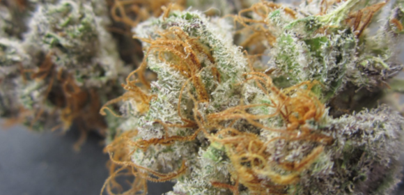 Confidential Cookies Strain Information