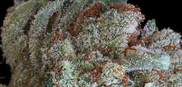 Death By Cake OG Strain Information