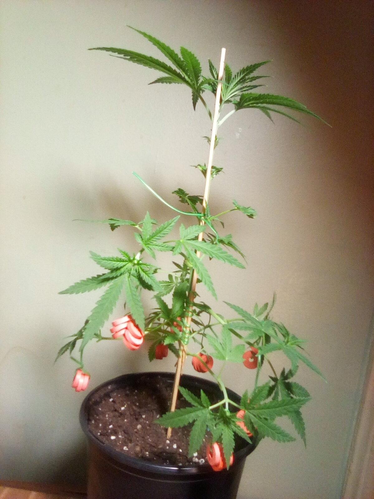GL 3 - Flowering