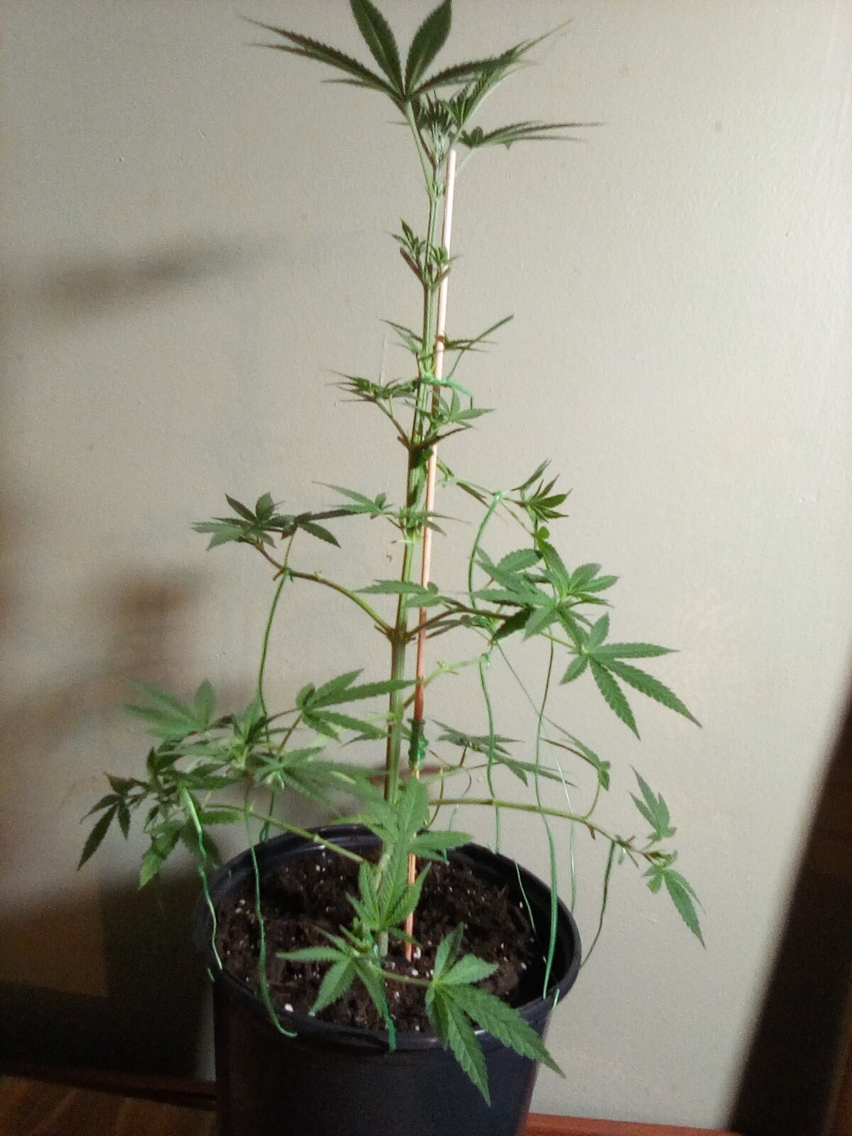 GL 2 - Flowering