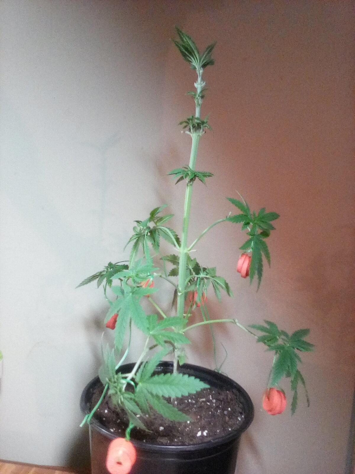 GL 5 - Flowering