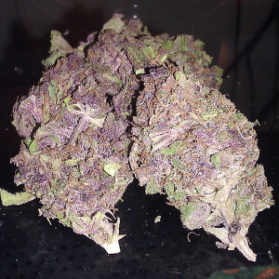 Large nugs of Purple Kush