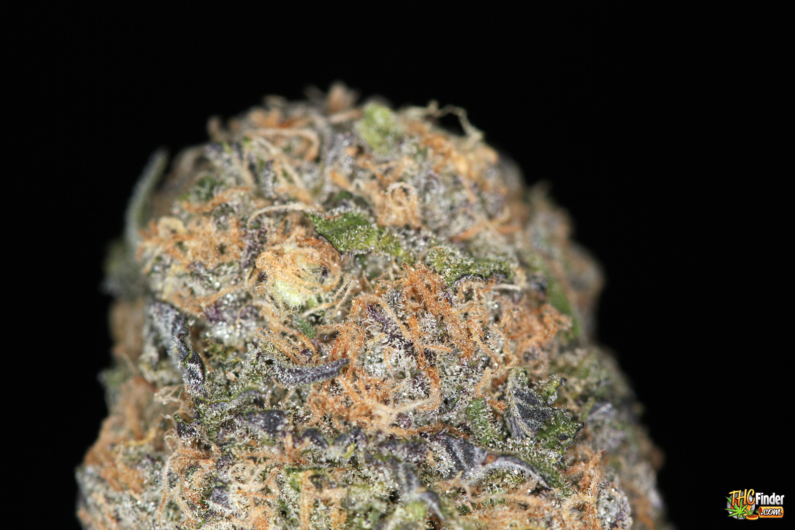 Close up of platinum wreck - Platinum Wreck