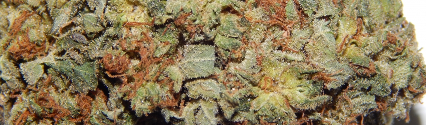 Close up shot of Old School OG
