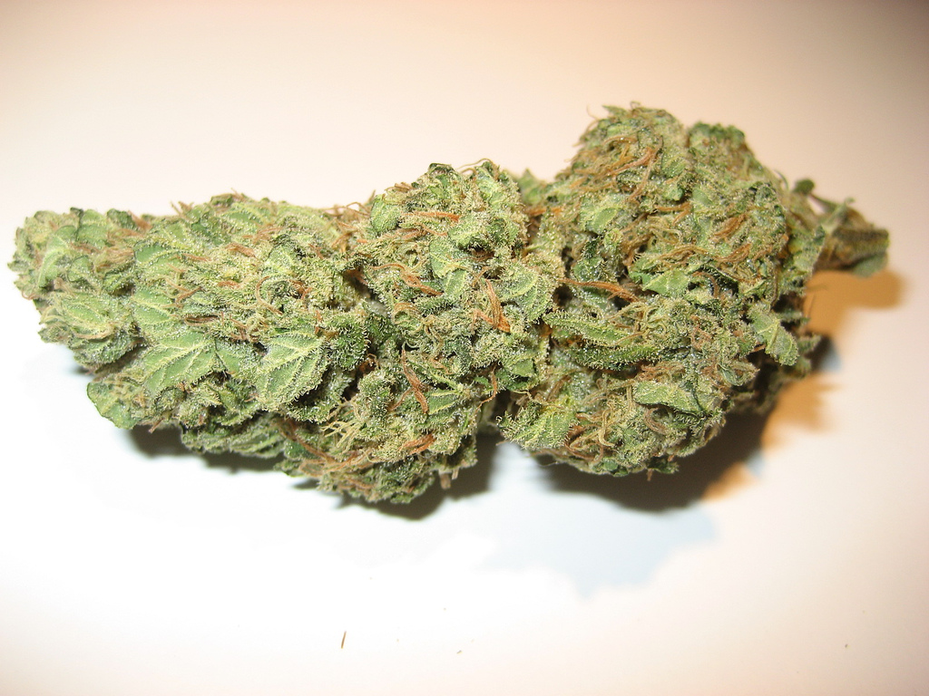 Medium sized nug of Pink Kush - Pink Kush Marijuana Strain