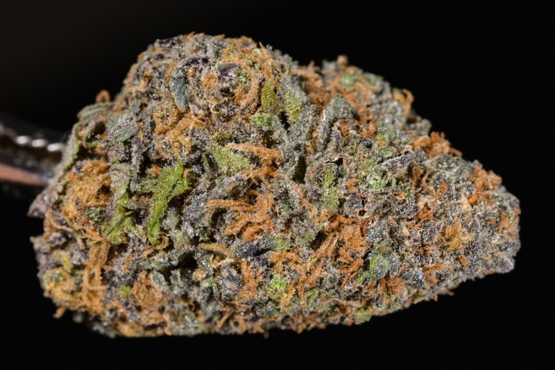 official pic of Granddaddy purp (medium nug) - Granddaddy Purple Marijuana Strain