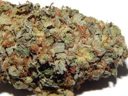 Old School OG (close UP)