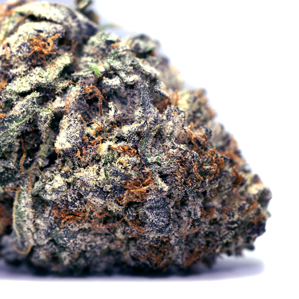 Sexy picture of Purple Kush nug - Purple Kush Marijuana Strain
