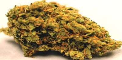 Taliban Poison (large nug)