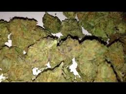 Taliban poison (sorry for blur) - Taliban Poison Marijuana Strain