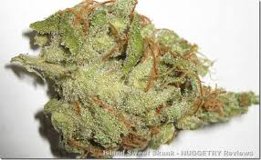 TRICHROME ALERT - tropical tang - Tropical Tang Marijuana Strain