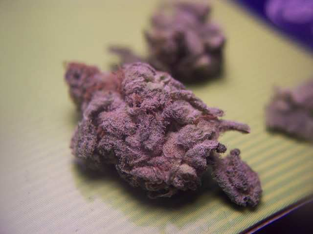 Ultimate Purple Kush nug - Purple Kush Marijuana Strain