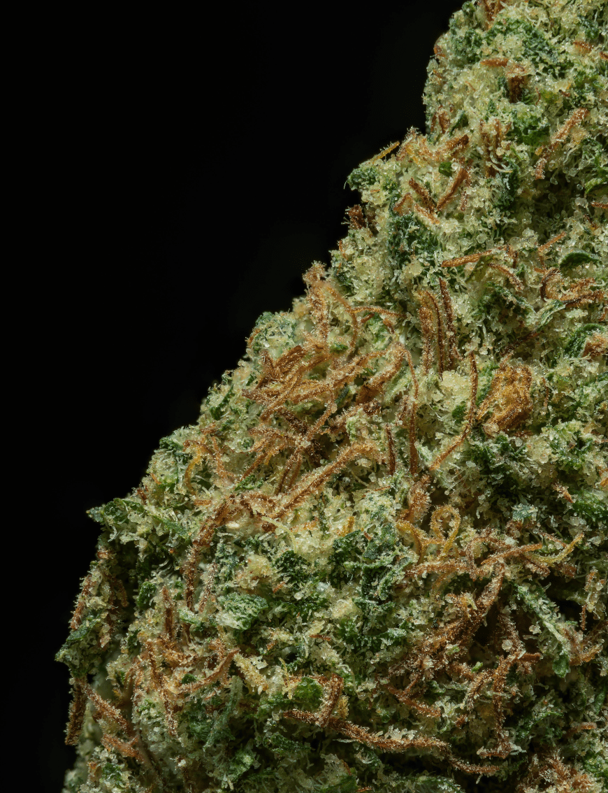 Up close and Personal w/ Bootlegger nug